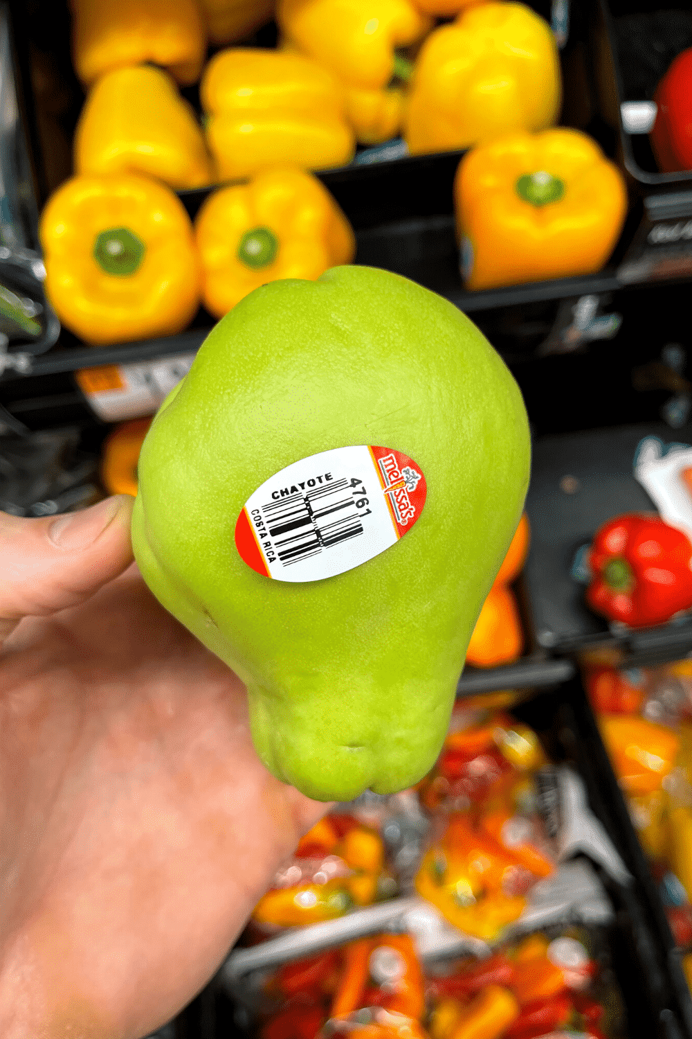 A hand holding a chayote.