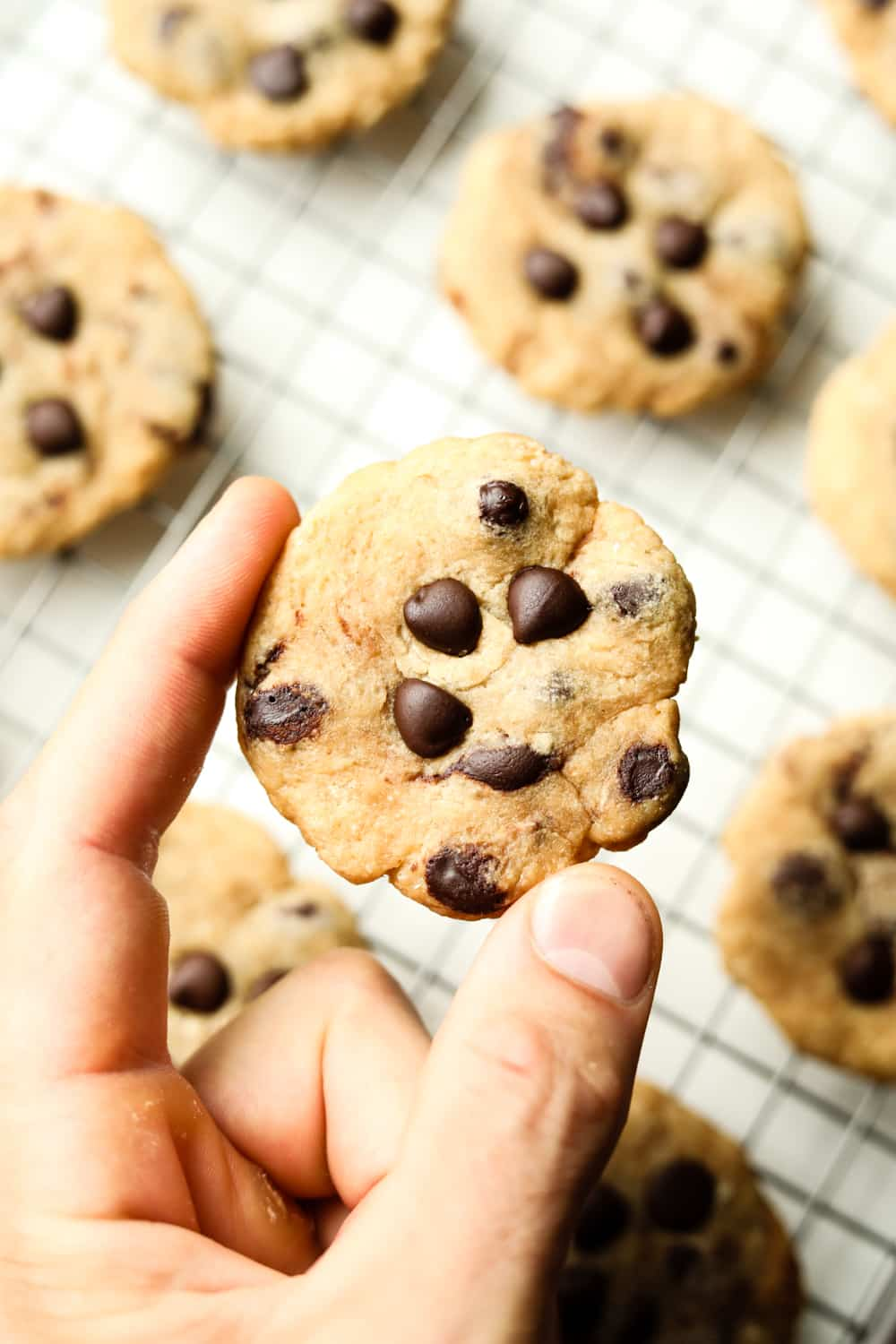 A hand holding a chocolate chip cookie. There are other cookies on a wire rack underneath it.